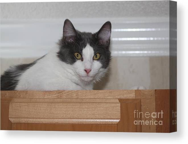 Cat Canvas Print featuring the photograph Rest Stop by Michelle Powell