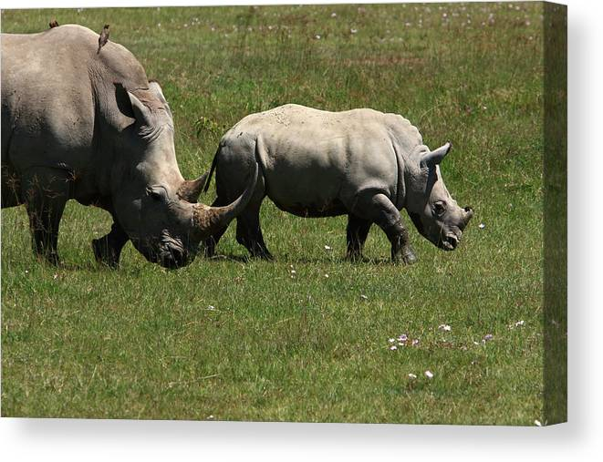 Rhinoceros Canvas Print featuring the photograph Rhinoceros by Aidan Moran
