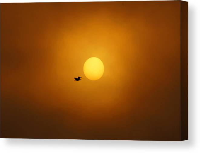 Sunrise Canvas Print featuring the photograph Sailing Past The Sun by Bill Pevlor