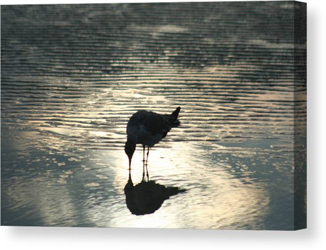 Reflection Canvas Print featuring the photograph Sandpiper Reflection by Jeff Wright