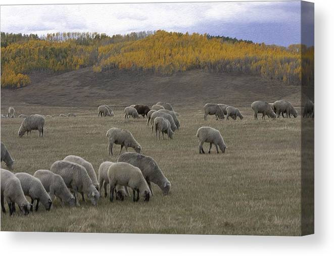 Sheep Canvas Print featuring the mixed media Sheep In The Field by Renee Skiba