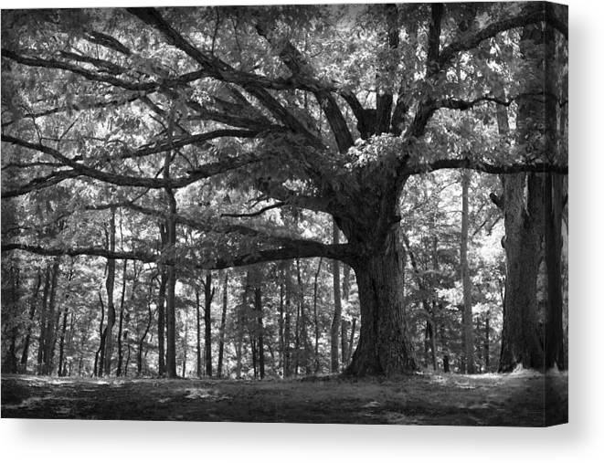 Tree Canvas Print featuring the photograph Shelter Me by Shari Jardina