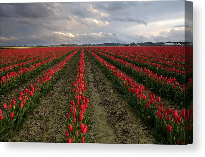 America Photographs Canvas Print featuring the photograph Stormy Red Tulips by David Forster