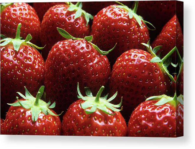 'elsanta' Canvas Print featuring the photograph Strawberries (fragaria 'elsanta') by Andrew Ackerley/science Photo Library