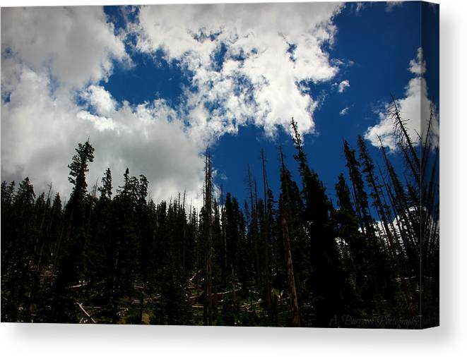 Flagstaff Canvas Print featuring the photograph Subalpine Summer Skies by Aaron Burrows