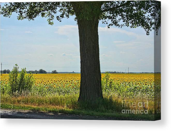 Flowers Canvas Print featuring the photograph Sunflower Field by Michelle Tinger
