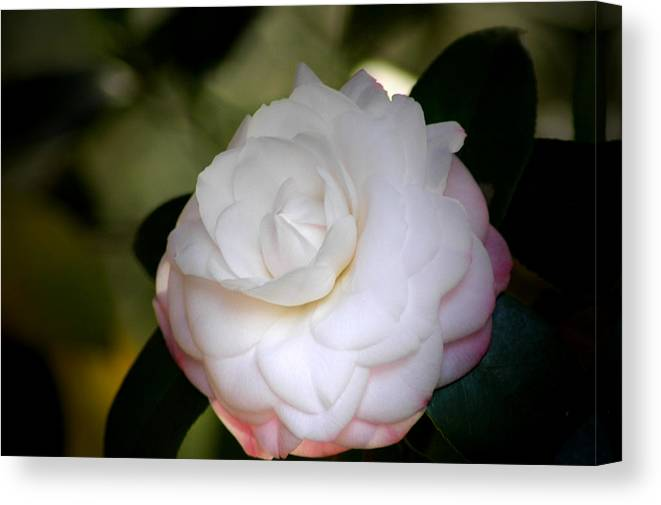 Flower Canvas Print featuring the photograph Symmetry 3 by David Weeks