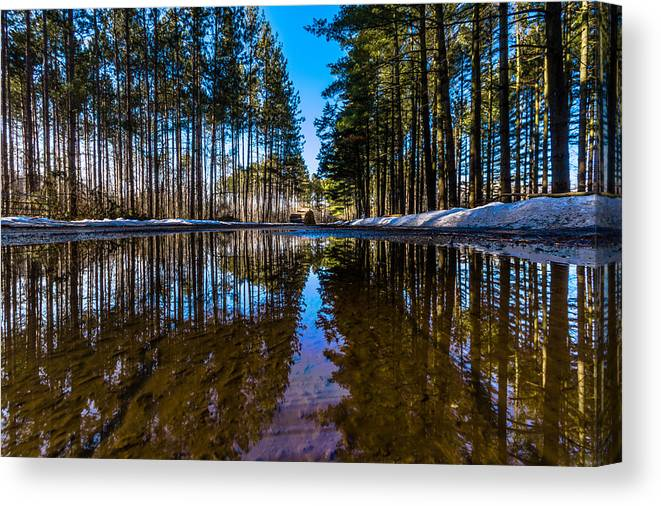 Kettle Moraine State Forest Canvas Print featuring the photograph Tall Pines by Randy Scherkenbach