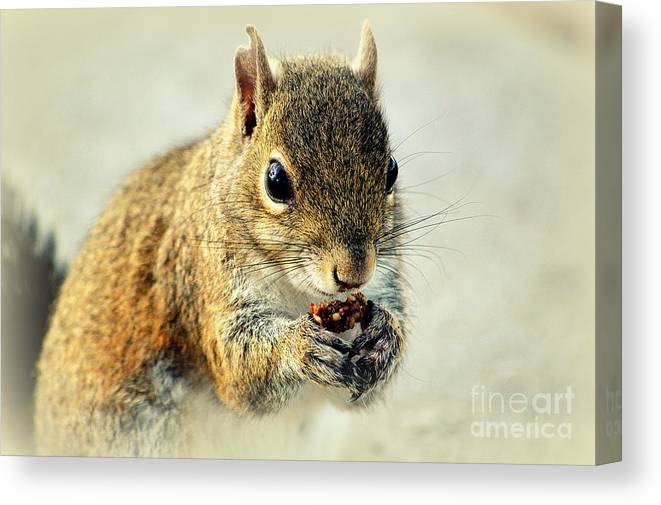 Squirrel Canvas Print featuring the photograph That's Now Some Good Food by Susanne Van Hulst
