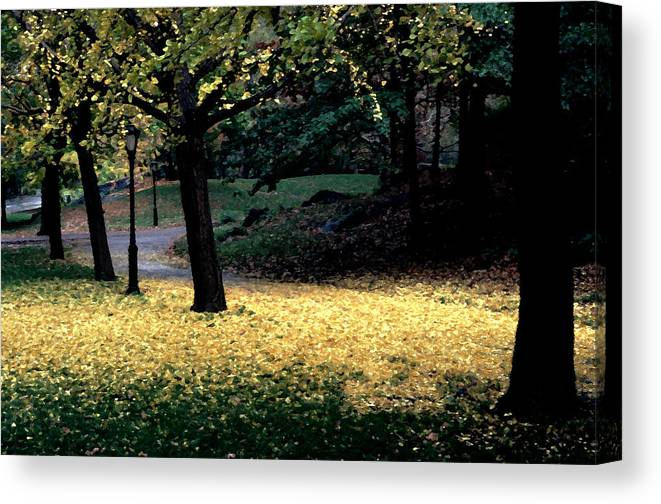 Autumn Canvas Print featuring the photograph The Golden Gingko Path by Tom Wurl