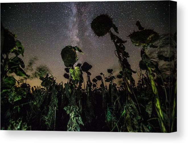 Plants Canvas Print featuring the photograph The Night Of The Triffids by Aaron J Groen