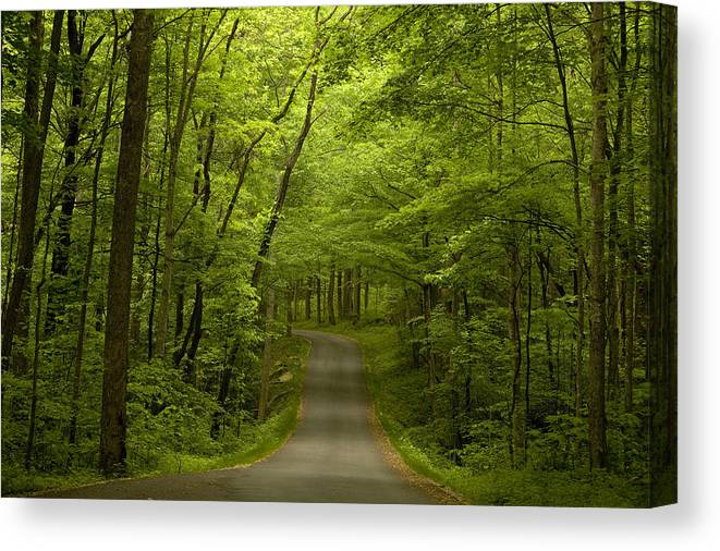 Road Canvas Print featuring the photograph The Road Less Travelled by Andrew Soundarajan