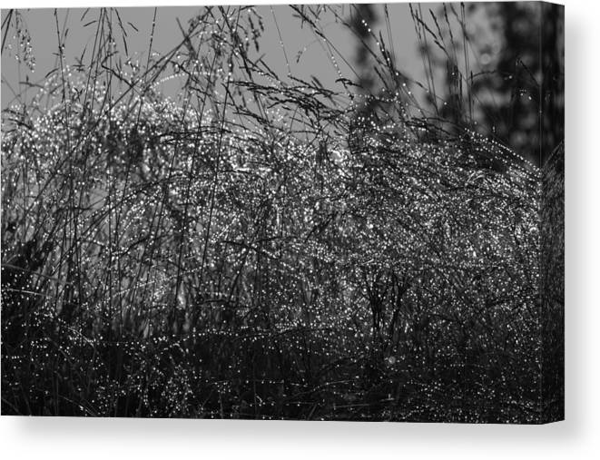 Abstract Canvas Print featuring the photograph Thousands Of Shimmering Raindrops - Monochrome by Ulrich Kunst And Bettina Scheidulin