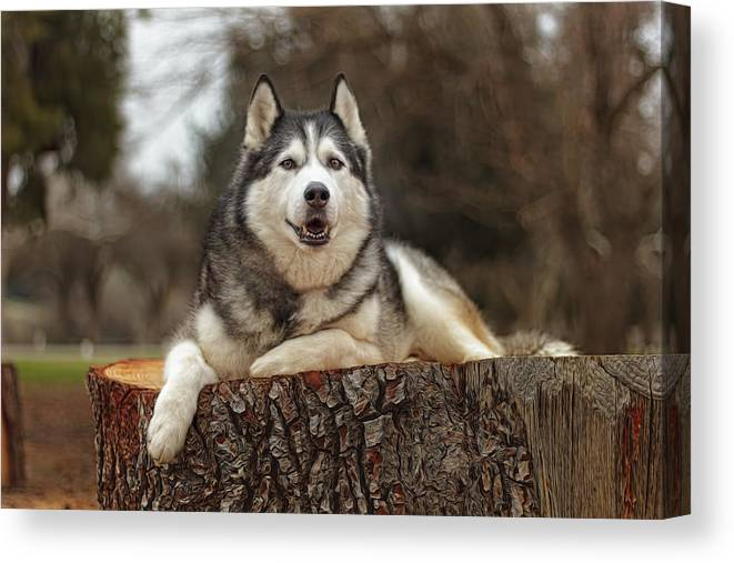 Animal Canvas Print featuring the photograph Timber by Brian Cross
