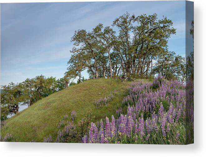 Lupine Canvas Print featuring the photograph Trail Of Lupine by Greg Nyquist
