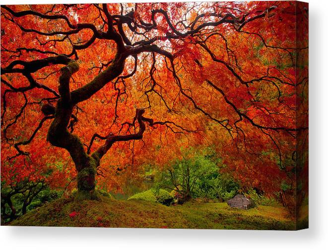Portland Canvas Print featuring the photograph Tree Fire by Darren White