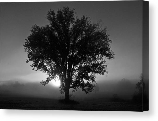 Tree Canvas Print featuring the photograph Tree In Black And White by Patrick Friery