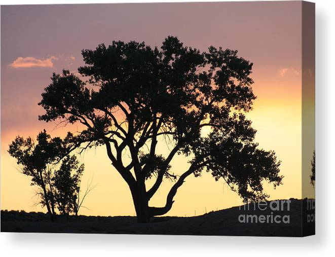 Tree Canvas Print featuring the photograph Tree Of Life by Brandi Maher