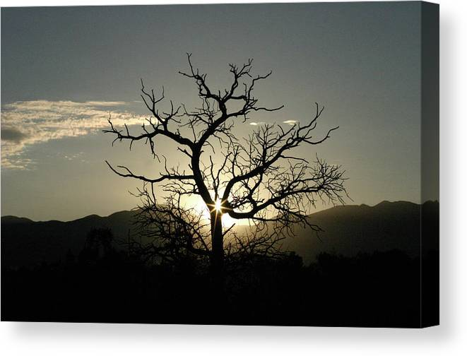 Tree Canvas Print featuring the photograph Tree Of Light by James Knight