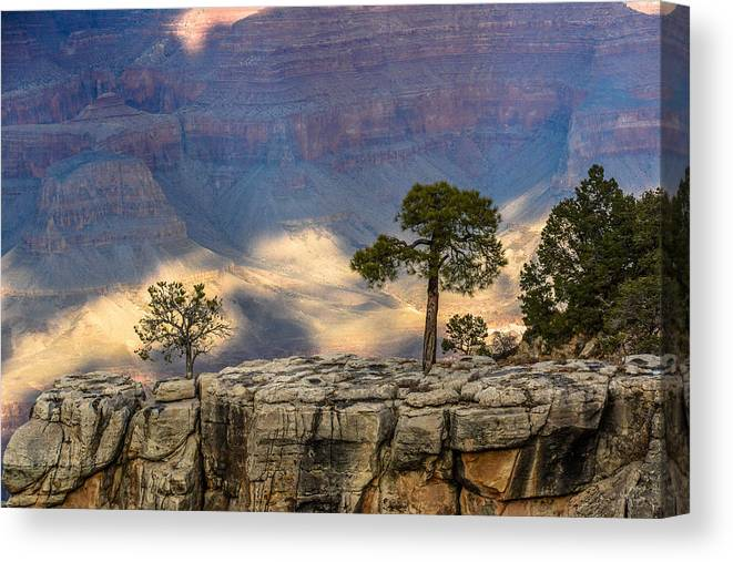 Arizona Canvas Print featuring the photograph Trees At The Grand Canyon by Pamela Schreckengost