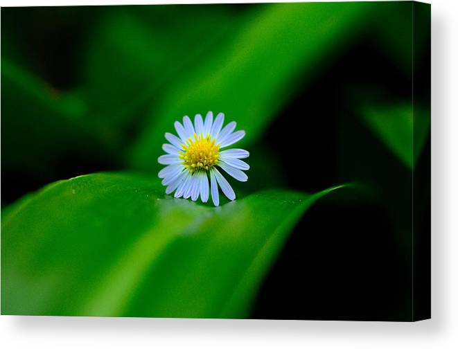 Flowers Canvas Print featuring the photograph Twenty Two by John Blanchard