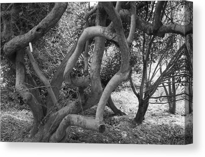 Tree Canvas Print featuring the digital art Twisted Trees by Emma Vernel