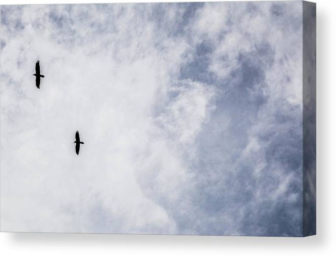 Arizona Canvas Print featuring the photograph Two Ravens by Pamela Schreckengost