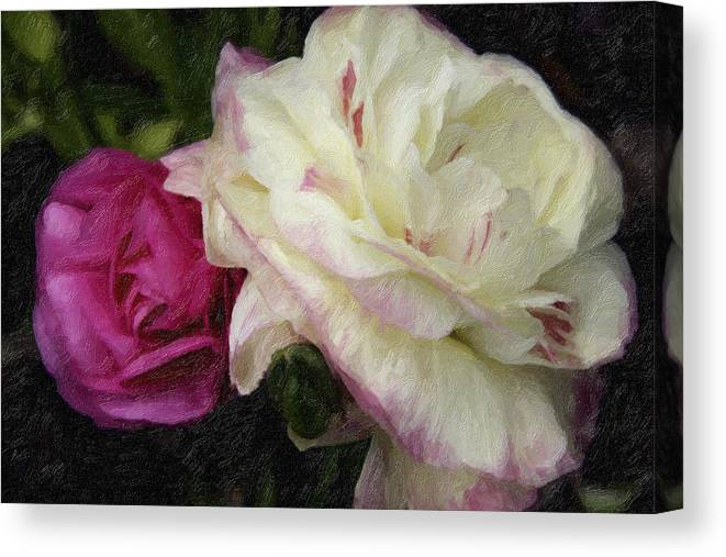 Flowers Photographs Canvas Print featuring the photograph Two Roses by David Allen Pierson