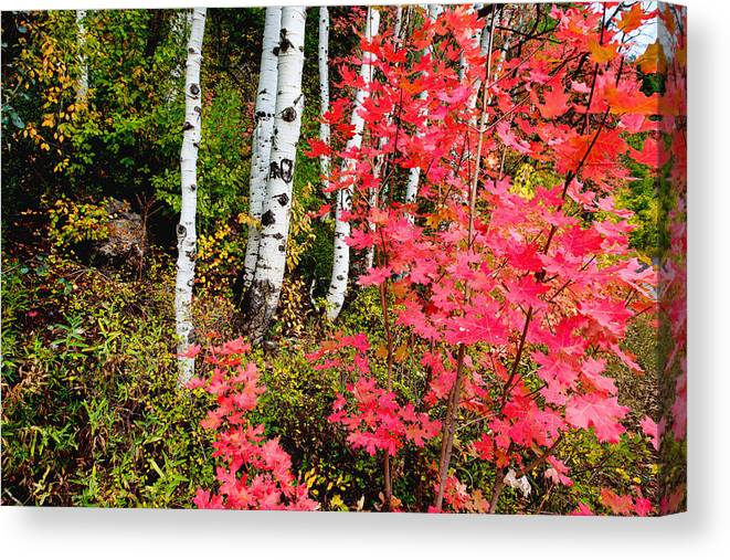 Uinta Colors Canvas Print featuring the photograph Uinta Colors by Chad Dutson