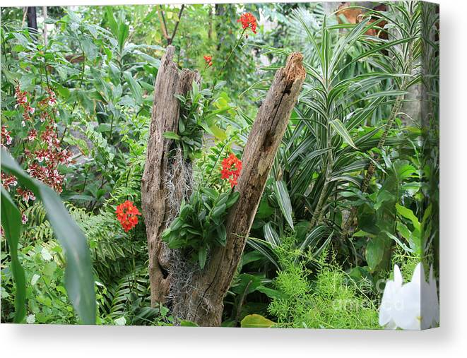 Forest Canvas Print featuring the photograph V by George DeLisle