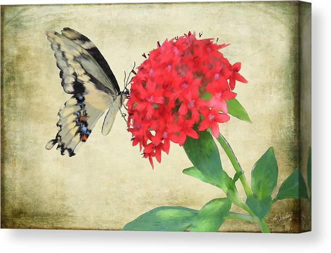 Butterfly Canvas Print featuring the mixed media Watercolor Butterfly by Rosalie Scanlon