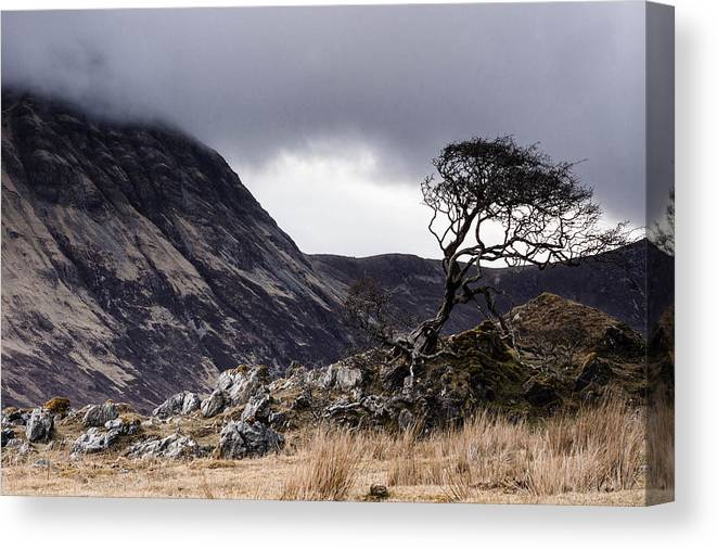 Canvas Print featuring the photograph Weathered Tree by Tomas Urban