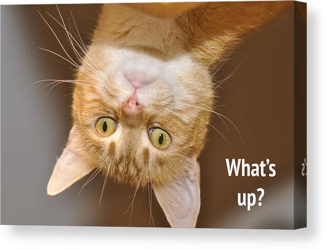 Cat Canvas Print featuring the photograph What's Up 2 by Donna Doherty