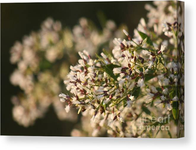 White Canvas Print featuring the photograph White Flowers by Nadine Rippelmeyer