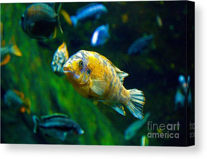 Fish Canvas Print featuring the photograph Who You Looking At by Bob McGill