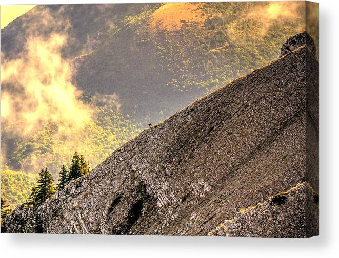 South France Canvas Print featuring the photograph Wild Goat by Seruddin Salleh