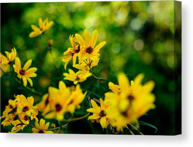 Wildflowers Canvas Print featuring the photograph Wildflowers by John Blanchard