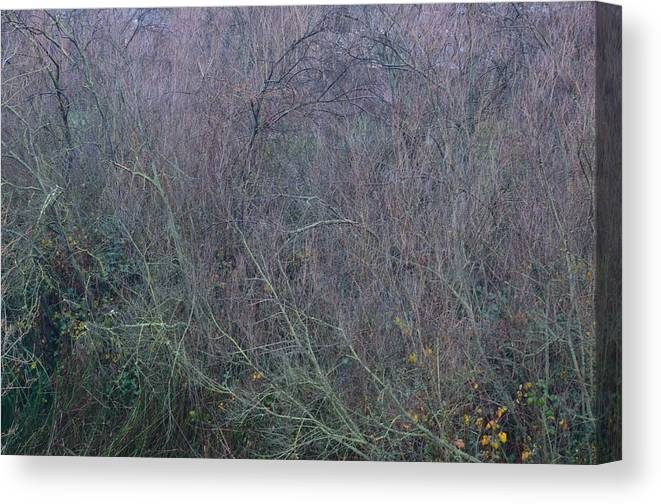 Winter Canvas Print featuring the photograph Winter Tangle II by Charles Majewski