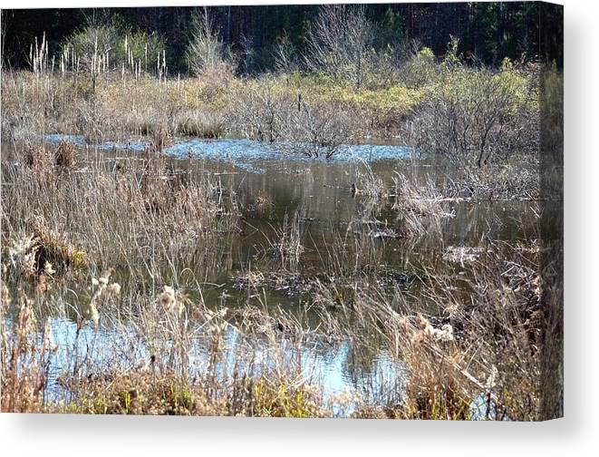 Winter Wetlands Of Alabama Canvas Print featuring the photograph Winter Wetlands Of Alabama by Maria Urso