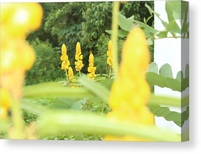 Yellow Canvas Print featuring the photograph Yellow Flowers by Erik Lagman