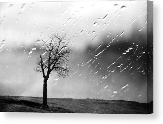 Tree Canvas Print featuring the photograph Your Tears I Root by The Artist Project
