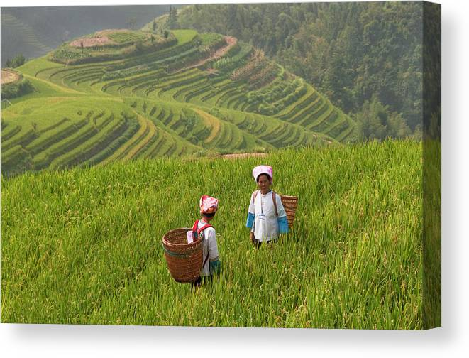 Scenics Canvas Print featuring the photograph Zhuang Minority Women Walk Through Rice by Diana Mayfield
