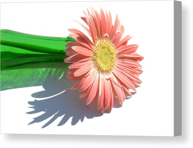 Gerbera Photographs Photographs Photographs Canvas Print featuring the photograph 0627a-001 by Kimberlie Gerner