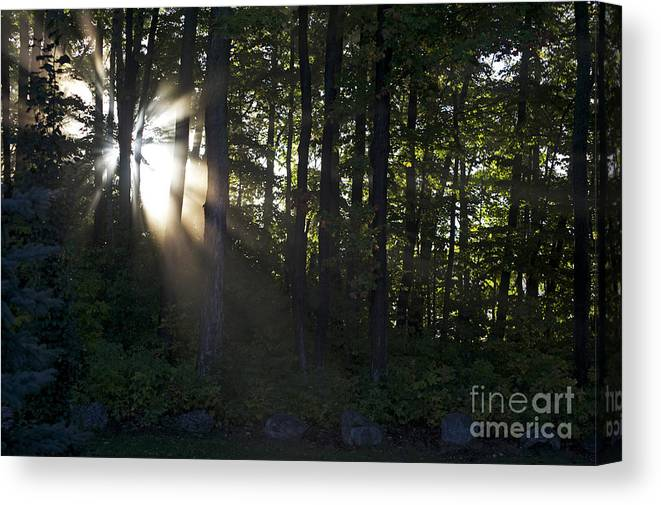 Morning Canvas Print featuring the photograph Sunrise by Elaine Mikkelstrup