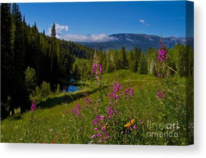 Altitude Canvas Print featuring the photograph Ohio Creek Valley Colorado by Crystal Garner