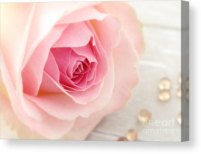 Rose Canvas Print featuring the photograph A Rose by LHJB Photography