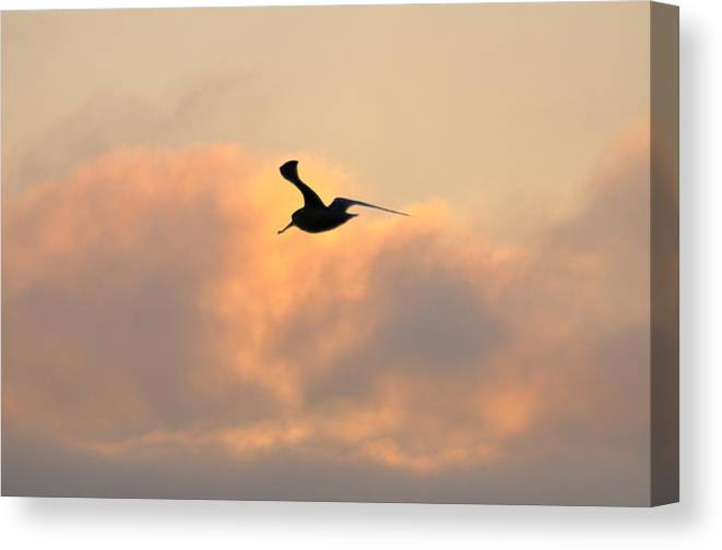Seagull Canvas Print featuring the photograph A Seagull Takes Flight by Bill Cannon