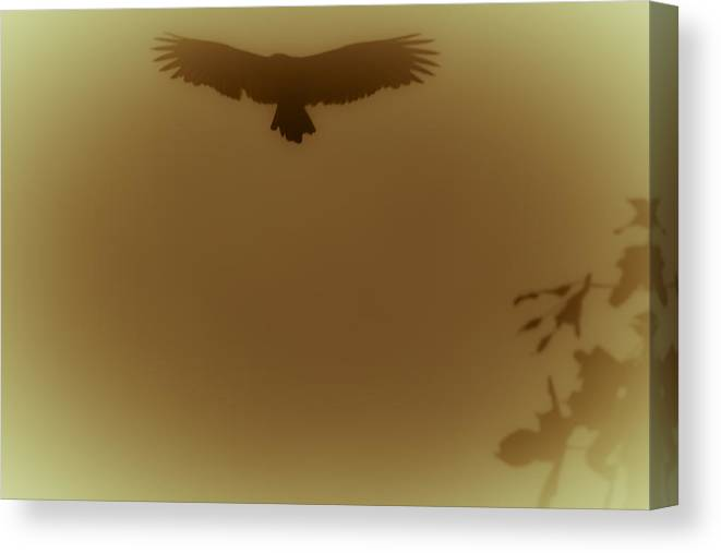 Vulture Canvas Print featuring the photograph Above The Lake by Kim Henderson