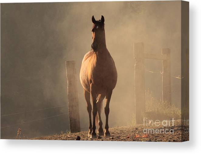Horse Canvas Print featuring the photograph After The Run by Rod Giffels