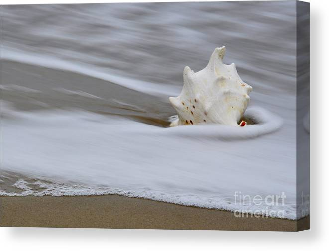 Sea Canvas Print featuring the photograph After The Wave by Tamera James